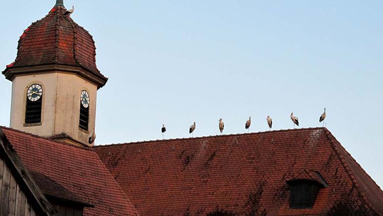 Nachwuchs Für Die Thanner Kirche???