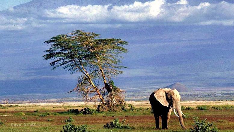Reisesegen Für Tansania