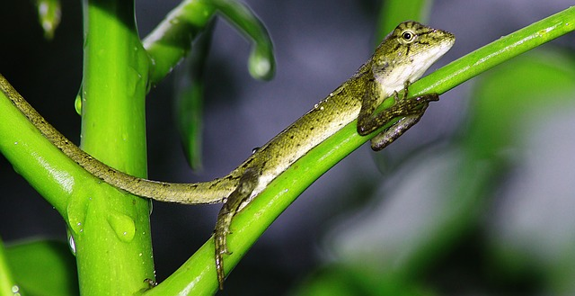 Mit Dem Gecko-Effekt Den Weitblick Lernen